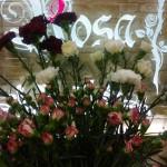 Kwiaty 37