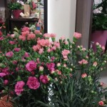 Nasza kwiaciarnia 17