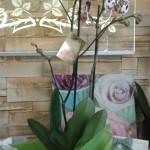 Kwiaty 56