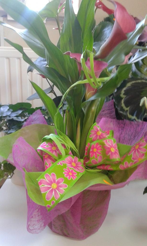 Kwiaty 59