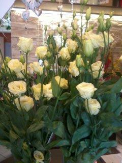 Kwiaty 13
