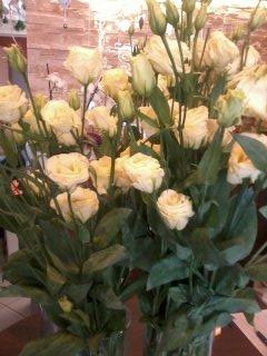 Kwiaty 15