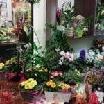 Nasza kwiaciarnia 8