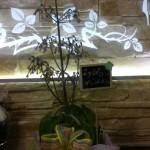Kwiaty 26