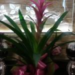 Kwiaty 29