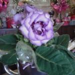 Kwiaty 62